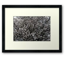 White Blooming  Tree Framed Print