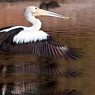 """""""Taking Off"""" by Heather Thorning"""