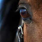 Equine eye by heidiannemorris