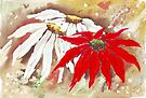 The Poinsettia and the Daisies by Maree  Clarkson