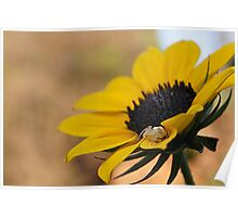 Spider waiting for lunch in a flower Poster