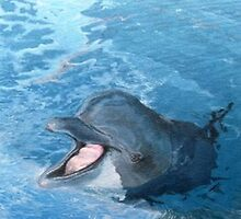 Dolphin smile by Alan Minshull