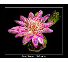 """Pink Waterlily - """"Enameled"""" Special Effect Photographic Print"""