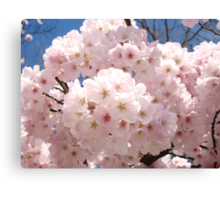 Bright Pastel Pink Spring Tree Blossom Flowers Baslee Canvas Print