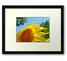 Contemporary art Yellow Sunflower print Photography Framed Print