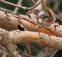 Tree Barks by Mukesh Vyas
