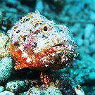 Scorpion Fish Sitting Pretty by Rich Synowiec