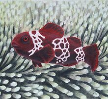 Maroon Lightning Clownfish by Heather Ward