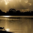 Golden Hour at Lake Monger by Ladyshark