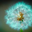 Blue Dandelion by DonDavisUK