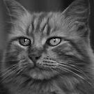 Kat by Jon Staniland