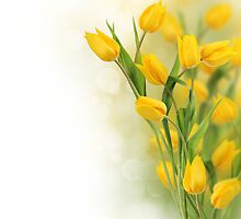 Yellow tulips by Pics4merch