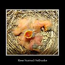 Feed me! (Baby Robins) by Rose Santuci-Sofranko