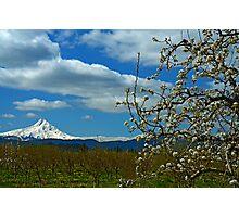 Fruit Loop Landscape Photographic Print