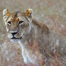 Camouflage: Female Lion Portrait, Maasai Mara, Kenya  by Carole-Anne