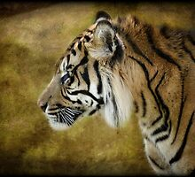 Portrait of a Tiger  by Saija  Lehtonen