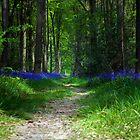 Woodland path by Martyn Franklin