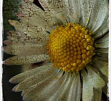 Floral Decay # 3 by Julesrules