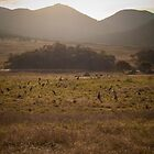 Mob of kangaroos, Namadgi National Park, Australia by Simone Clark