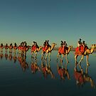 Camels on Cable Beach, Australia by Himself-Perth