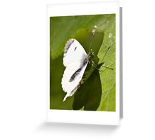 female orange tip butterfly Greeting Card