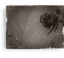 05-12-11:  The Spider  Canvas Print