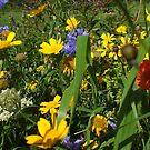 wildflower bank by Babz Runcie