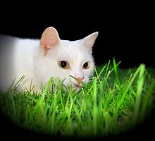 Ready to Pounce! by Sally Green