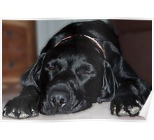 Dog tired!!!! Poster