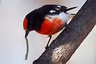 """Red-capped Robin ~ """"The Long Lunch"""" by Robert Elliott"""