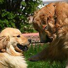 Wanna Shake On That Buddy? by AliceMc
