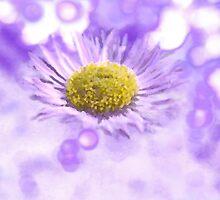 Wild Daisy in Lavender Light by Kate Eller