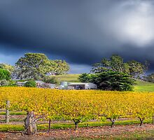 Barossa valley Storm Front Panorama by Shannon Rogers