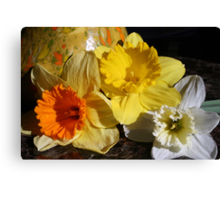 Daffodil Threesome Canvas Print