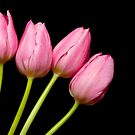 Four Pink Tulips by Platslee