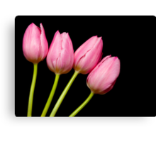 Four Pink Tulips Canvas Print