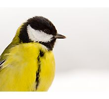 Great-Tit in the Snow Photographic Print