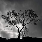 Jon's Mose's tree by clickinhistory