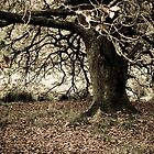 Ancient Oak by Tania Russell