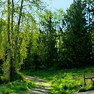 Country Roads ~Olympic Peninsula by Elaine Bawden
