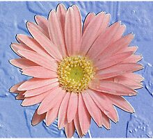 Pastel Dream - A Spring Daisy by Betty Northcutt