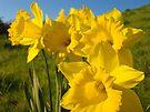 Golden Yellow Daffodil Flower Meadow art Baslee Troutman by BasleeArtPrints