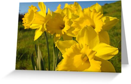 Golden Yellow Daffodil Flower Meadow art Baslee Troutman by BasleeArtPrints