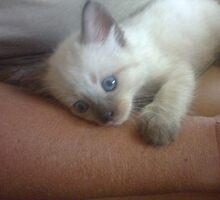 Mums cute little kitten (coco) by kymmie
