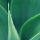 Abstract Leaves by JoeyKelava