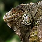 Lizard at Singapore Zoo by Steve Bass