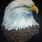 The Bald Eagle by freespirit1972