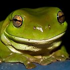 Green Tree Frog by Steve Bass
