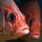 Sabre Squirrelfish twins by Valerija S.  Vlasov