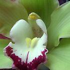 Orchid by Ana Belaj